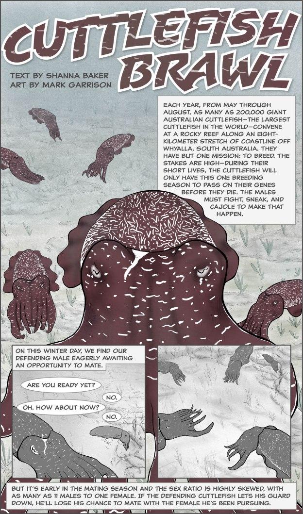 Cuttlefish Brawl-1